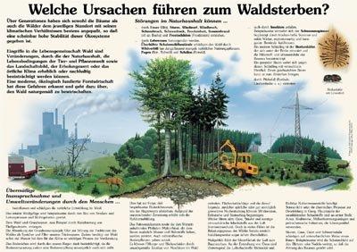 Welche Ursachen führen zum Waldsterben?