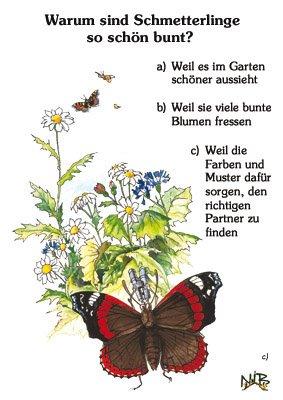 Warum sind Schmetterlinge so schön bunt?
