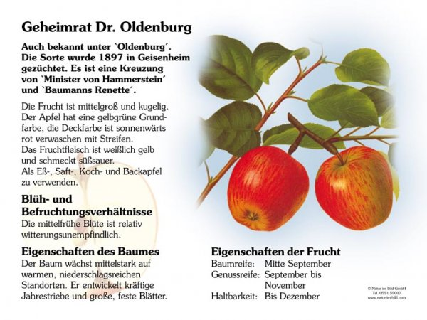 Geheimrat Dr. Oldenburg