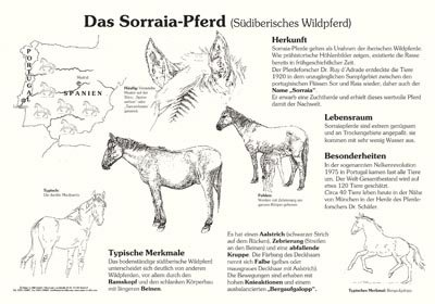 Das Sorraia-Pferd