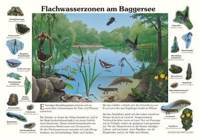 Flachwasserzonen am Baggersee