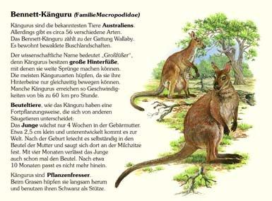 Bennet-Känguruh