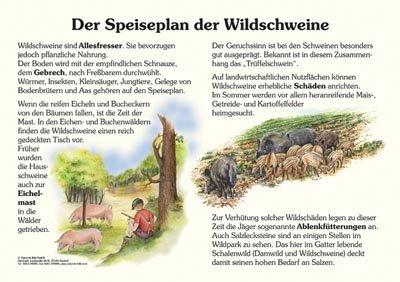 Der Speiseplan der Wildschweine