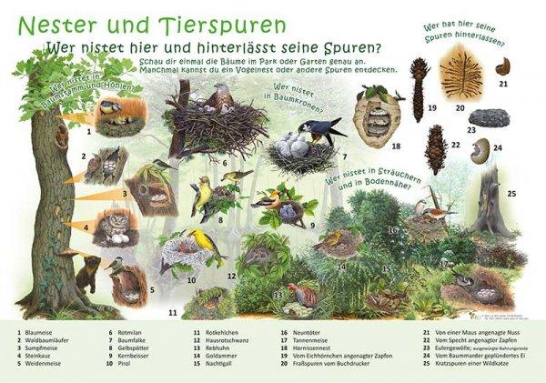 Nester und Tierspuren