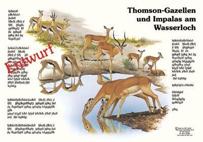 Thomson-Gazellen und Impalas am Wasserloch