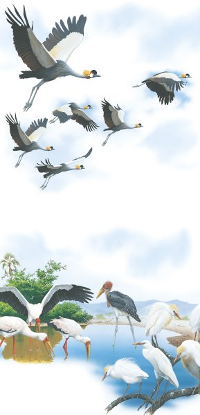 Magnettafel Stelzvögel