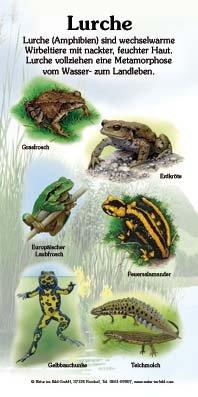Lurche (6 Arten)