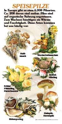 Speisepilze (6 Arten)