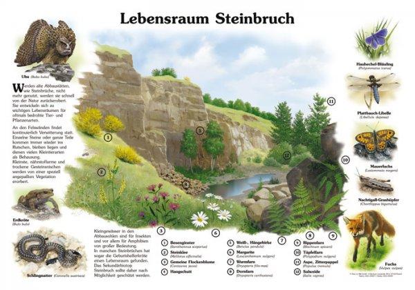 Lebensraum Steinbruch