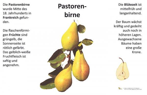 Pastorenbirne