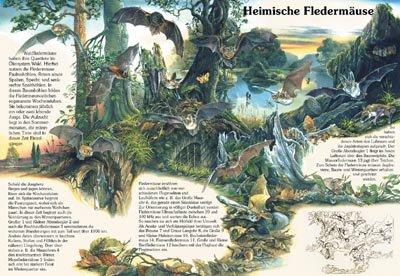 Heimische Fledermäuse - Wald