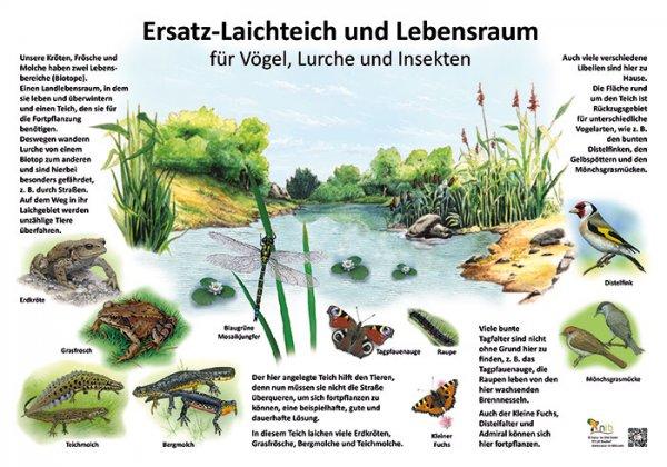 Ersatz-Laichteich und Lebensraum