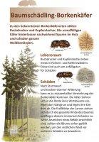 Baumschädling-Borkenkäfer