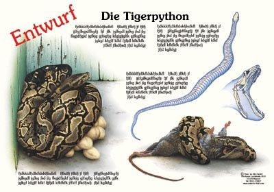 Die Tigerpython