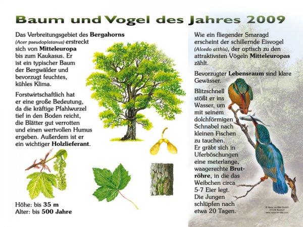 Baum und Vogel des Jahres 2009