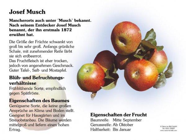 Josef Musch