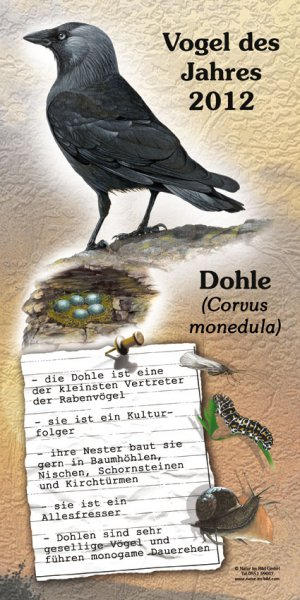 2012 Dohle