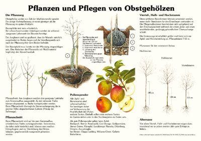 Pflanzen und Pflegen von Obstgehölzen