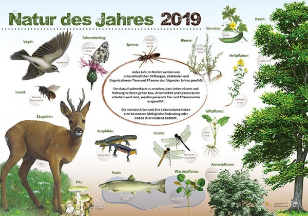 Natur des Jahres 2019