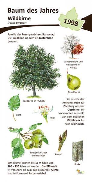 Wildbirne - Baum des Jahres 1998