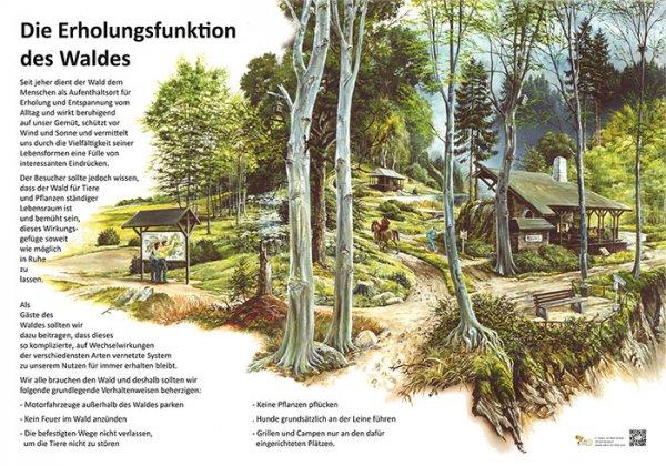 Die Erholungsfunktion des Waldes