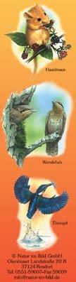 Haselmaus, Wendehals, Eisvogel