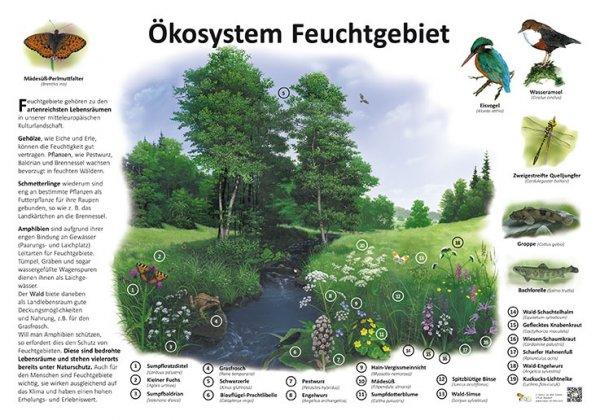 Ökosystem Feuchtgebiet