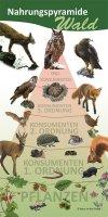 Nahrungspyramide Wald