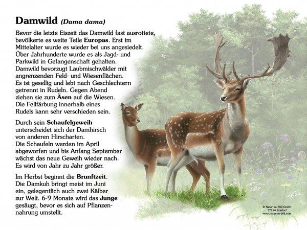 Damwild