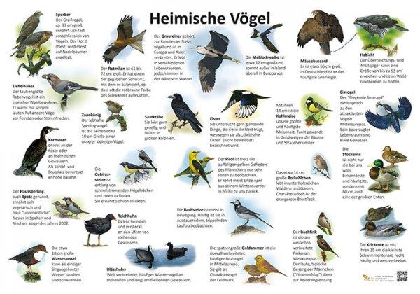 Heimische Vögel