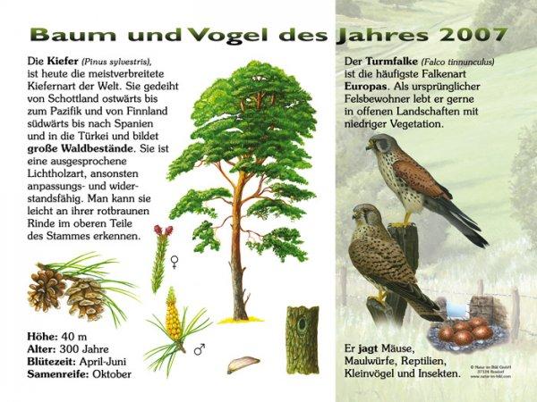 Baum und Vogel des Jahres 2007