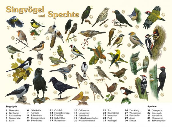 Singvögel und Spechte