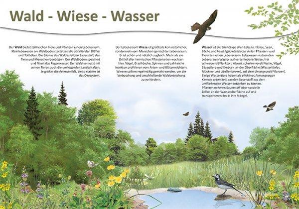 Wald-Wiese-Wasser