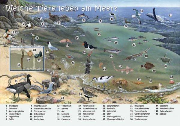 Welche Tiere leben am Meer?