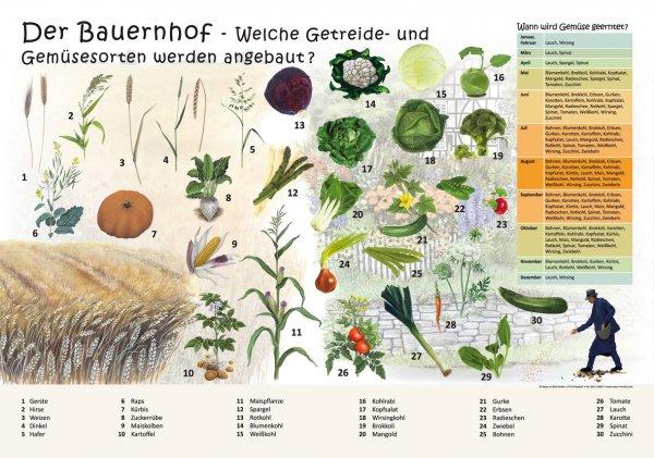 Der Bauernhof - Welche Getreide- und Gemüsesorten werden angebau