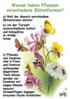 Warum haben Pflanzen verschiedene Blütenformen?