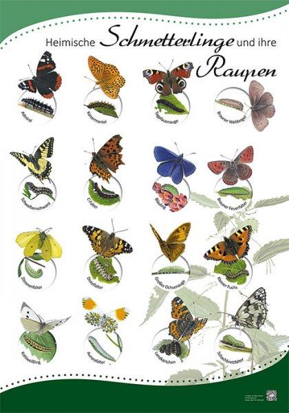 Heimische Schmetterlinge und ihre Raupen