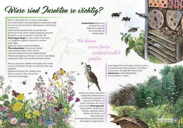 Wieso sind Insekten so wichtig?