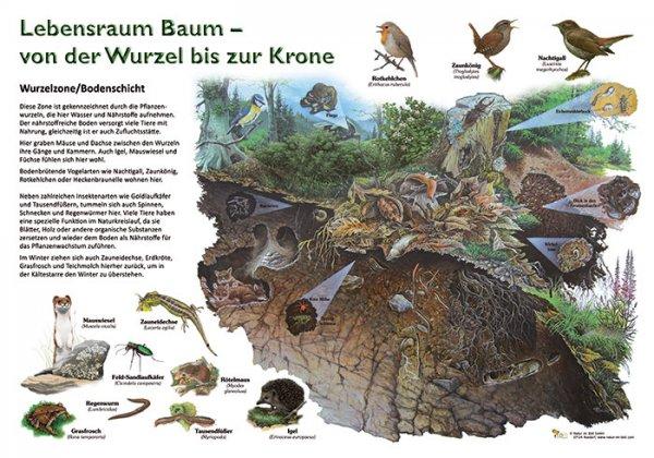 Lebensraum Baum - Wurzelzone