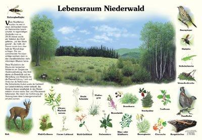 Lebensraum Niederwald