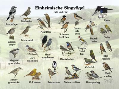 Einheimische Singvögel Feld, Flur, Gewässer