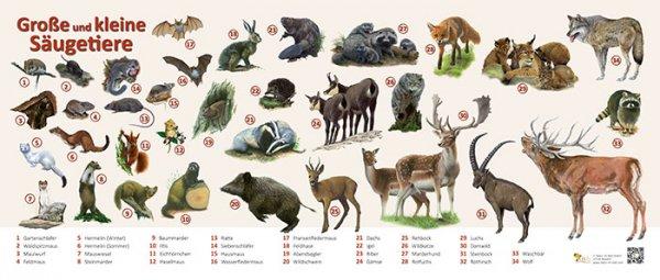 Große und kleine Säugetiere