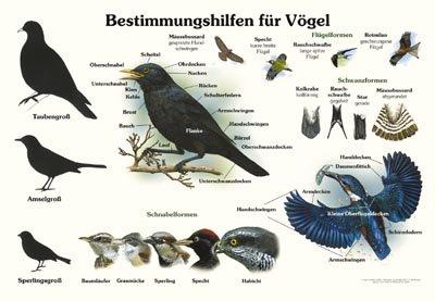 Bestimmungshilfen für Vögel