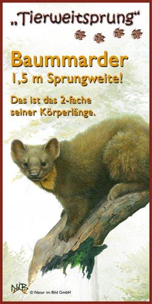 Tierweitsprung Baummarder