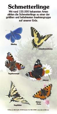 Schmetterlinge (6 Arten)