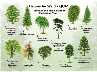 Bäume im Wald - Quiz