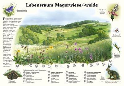 Lebensraum Magerwiese/-weide