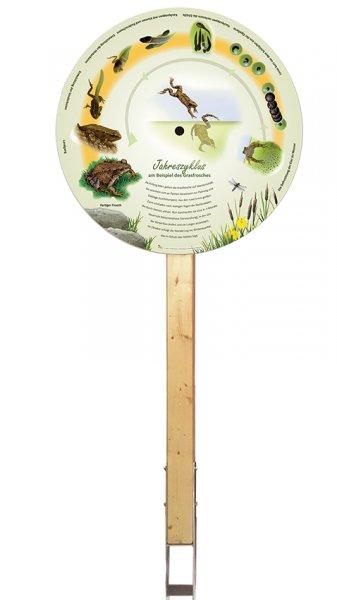 Jahreszyklus am Beispiel des Grasfrosches