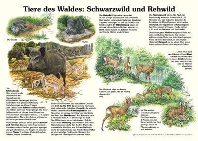 Tiere des Waldes: Schwarzwild und Rehwild