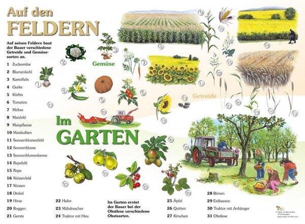 Auf den Feldern, im Garten